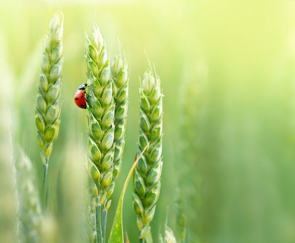 (ESP) La CE incluye a FOOD+i como clúster referente en la bioeconomía europea